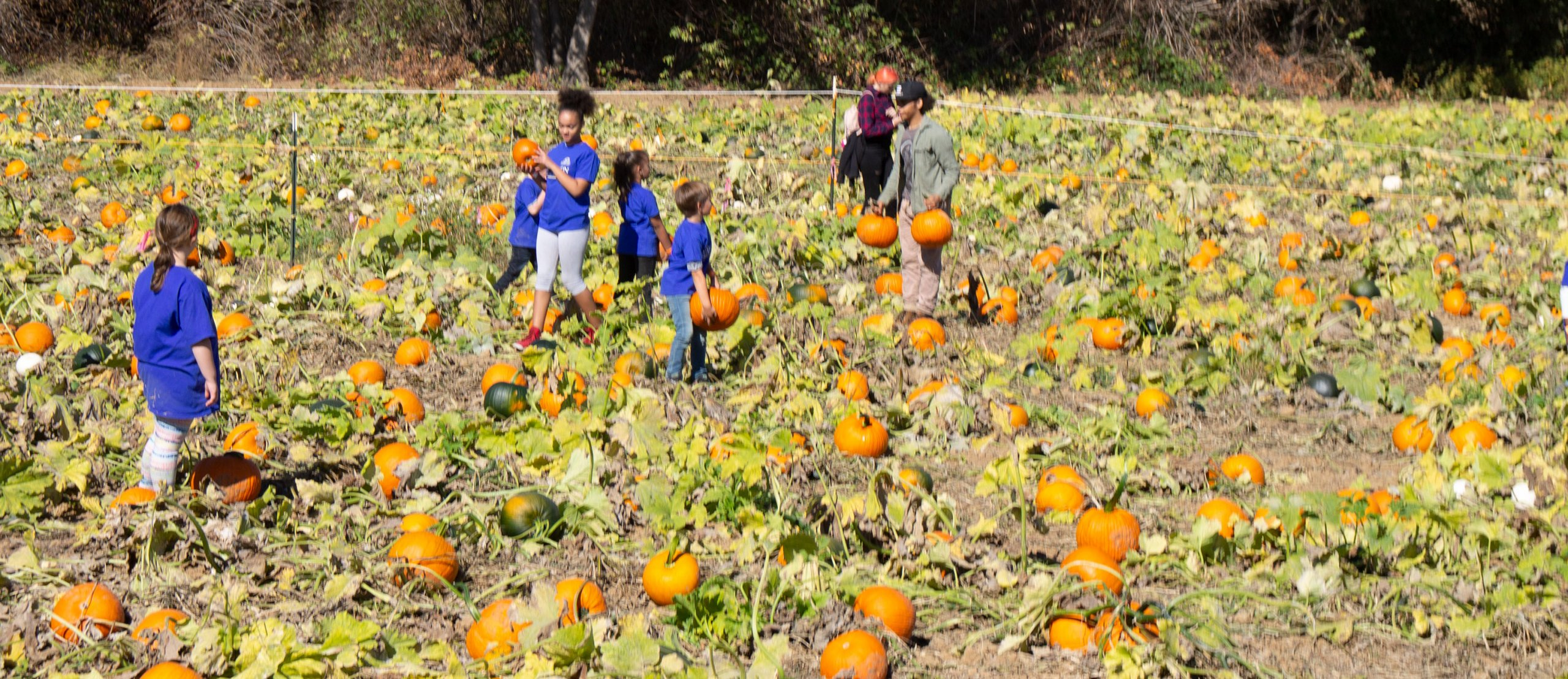 Horizon students search for pumpkins during a field trip
